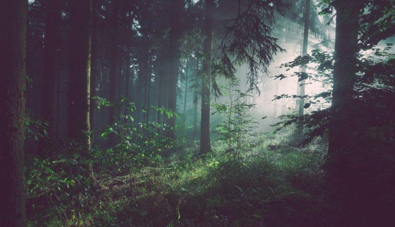 Grunden för ett ansvarsfulls skogsliv